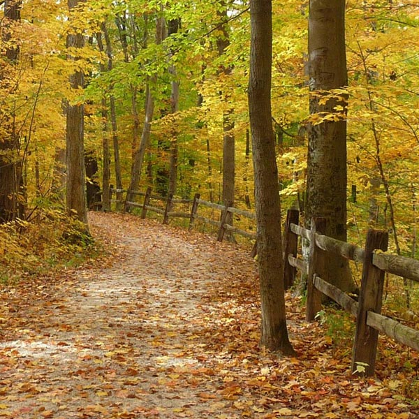 A beautiful Metro Parks hiking trail in autumn